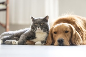 Забери меня с собой: 7 мест в Сочи, где вы можете взять себе собаку или кошку