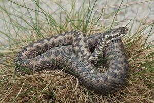 Чем опасны московские змеи и пауки?