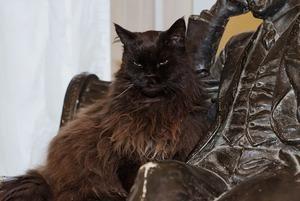 Старший мяучный сотрудник: Как живут коты в московских музеях
