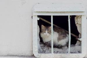 Клонирование телеграм-каналов, санкционная передышка и Минстрой за свободу кошек