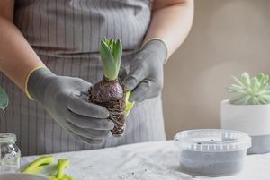 Забота о ближнем: Как пересаживать комнатные растения
