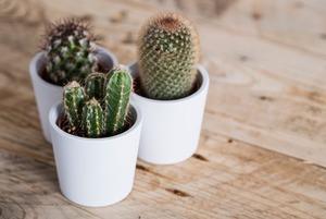 Гид по керамике для растений