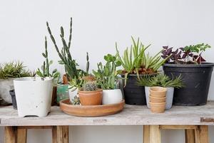Сколько стоит пристроить растения на время отпуска