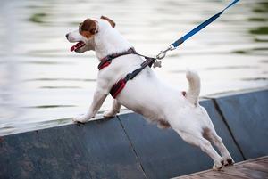 Как гулять с собакой (в том числе чужой) во время эпидемии коронавируса