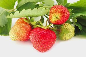 Как использовать неспелые фрукты?