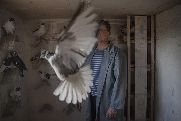 Последние романтики: Кто держит голубятни в Екатеринбурге
