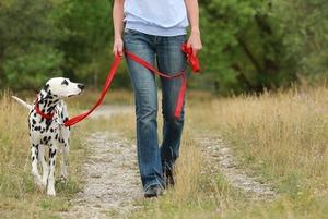 Сколько стоит пристроить животное на время отпуска