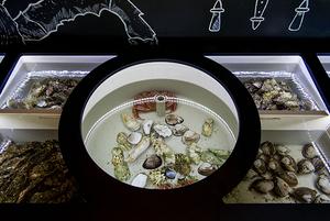 5 мест, где есть и заказывать устрицы в Сочи