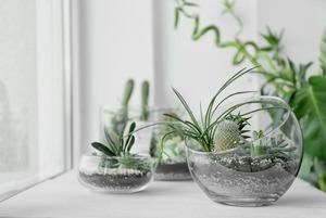 Чек-лист: Как пересаживать комнатные растения