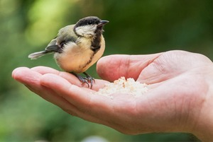 Десять фактов про птиц в Петербурге