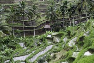 Почему работать на Бали оказалось не круто