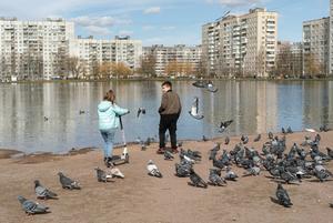 Центр Петербурга опустел, а спальные районы — нет. Вот как это выглядит