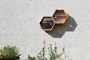 Можно ли разводить пчел в квартире? А скорпионов?