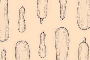 Сезон молодых овощей: Кабачок