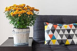 Как преобразить квартиру с помощью домашних растений