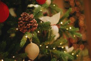 До Нового года 7 дней: Где купить елку в Сочи