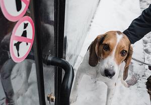 В какие кафе можно прийти с собакой в Нижнем Новгороде