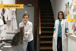 Коты и ты: Как помочь брошенным животным