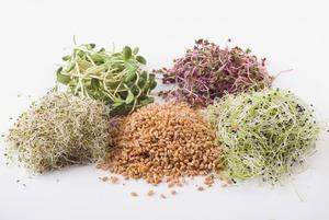 Перилла, шизо-микс и ростки пшеницы: Что такое микрозелень?