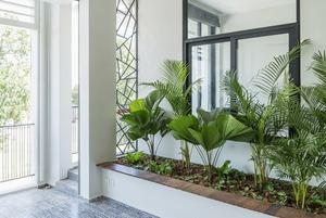 Чистый кислород: Как выбрать растения под стиль интерьера