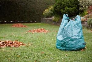 Надо ли убирать листву с газонов?