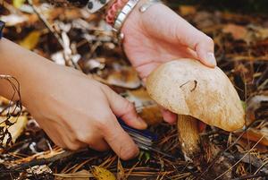 Редакция The Village ищет грибы в проверенном месте