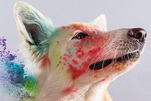 Цвет Вселенной и другие факты о цвете