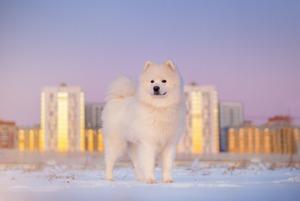 Как правильно защитить собачьи лапы ото льда и реагентов