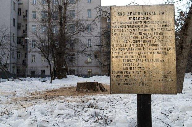 На Поварской спилили двухсотлетний вяз. Изображение № 2.