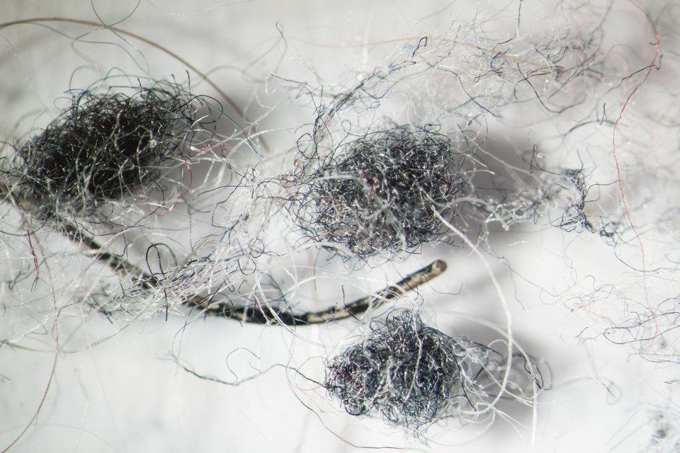 Как выглядит ваша домашняя пыль подмикроскопом. Изображение № 3.