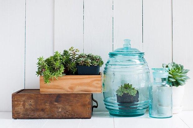 Как подобрать цветы и комнатные растения для дома. Изображение № 6.