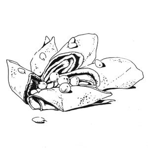 Свекольные блины с гусиным паштетом и джемом из тыквы и облепихи. Изображение № 8.