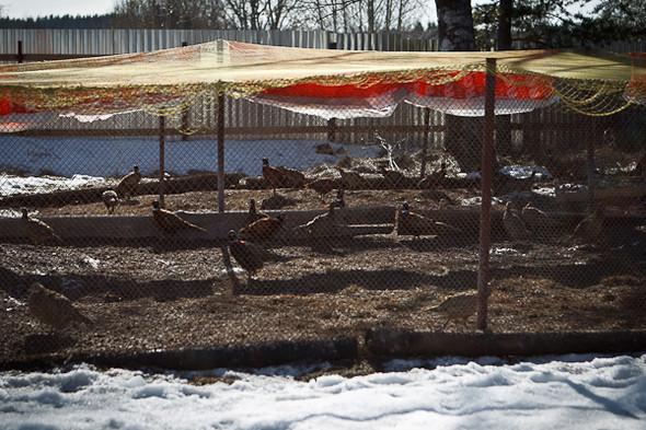 Народное хозяйство: 5 ферм, продукты которых можно купить в Петербурге. Изображение № 17.