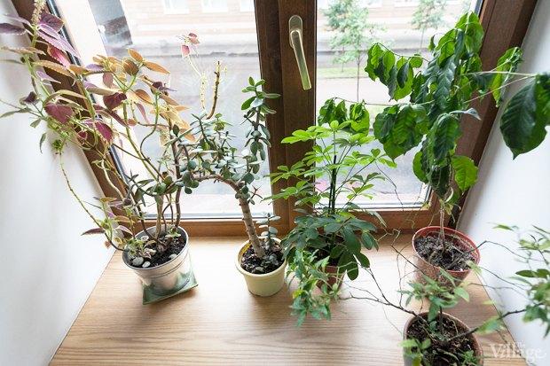 Где посадки: Что горожане выращивают на балконах иподоконниках. Изображение № 75.