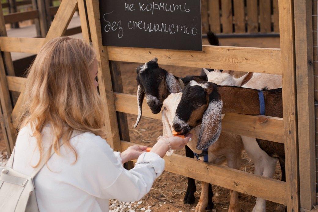 Меха на ВДНХ: Как устроена первая городская ферма. Изображение № 27.