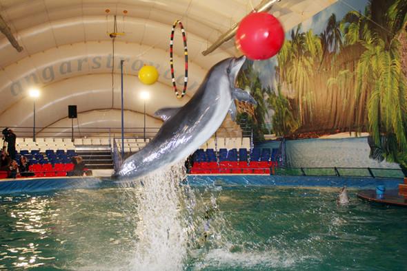 На ВВЦ открылся дельфинарий. Изображение № 5.