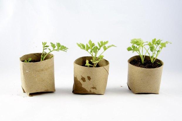 Где покупать комнатные растения икашпо. Изображение № 1.