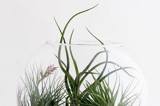 Воздушный цветок: Что делать с растением без корней. Изображение № 7.