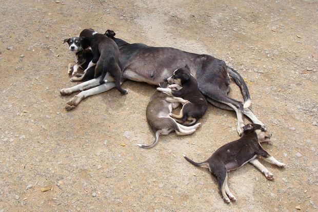 Иностранный опыт: Что делать сбездомными собаками. Изображение № 1.