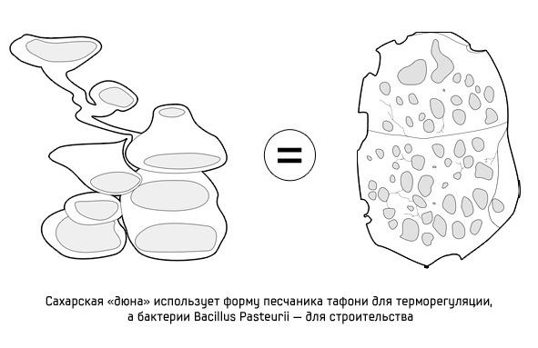 Дизайн от природы: Дом-термитник, жилая дюна и оранжереи в пустыне. Изображение № 9.