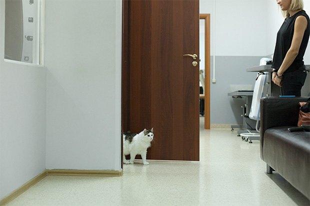 Кошкин дом: Как подготовить квартиру к появлению домашнего питомца. Изображение № 9.