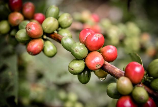 Кофе и перфекционизм: Как получить правильный эспрессо. Изображение № 8.
