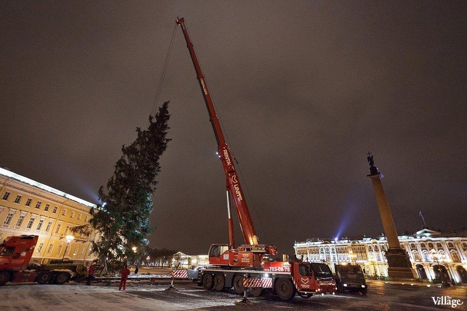 Фоторепортаж: Как устанавливали главную петербургскую ёлку. Изображение № 32.