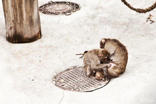 Директор московского зоопарка: «Погода была ужасной, всё выглядело очень грустно». Изображение № 15.