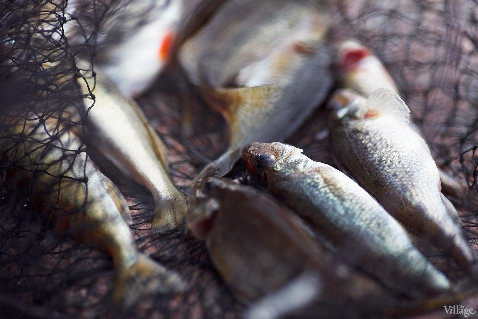 Люди в городе: Рыбаки Петербурга. Изображение № 18.