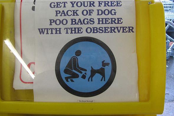 Московские власти взялись за «собачьи туалеты». Изображение № 6.