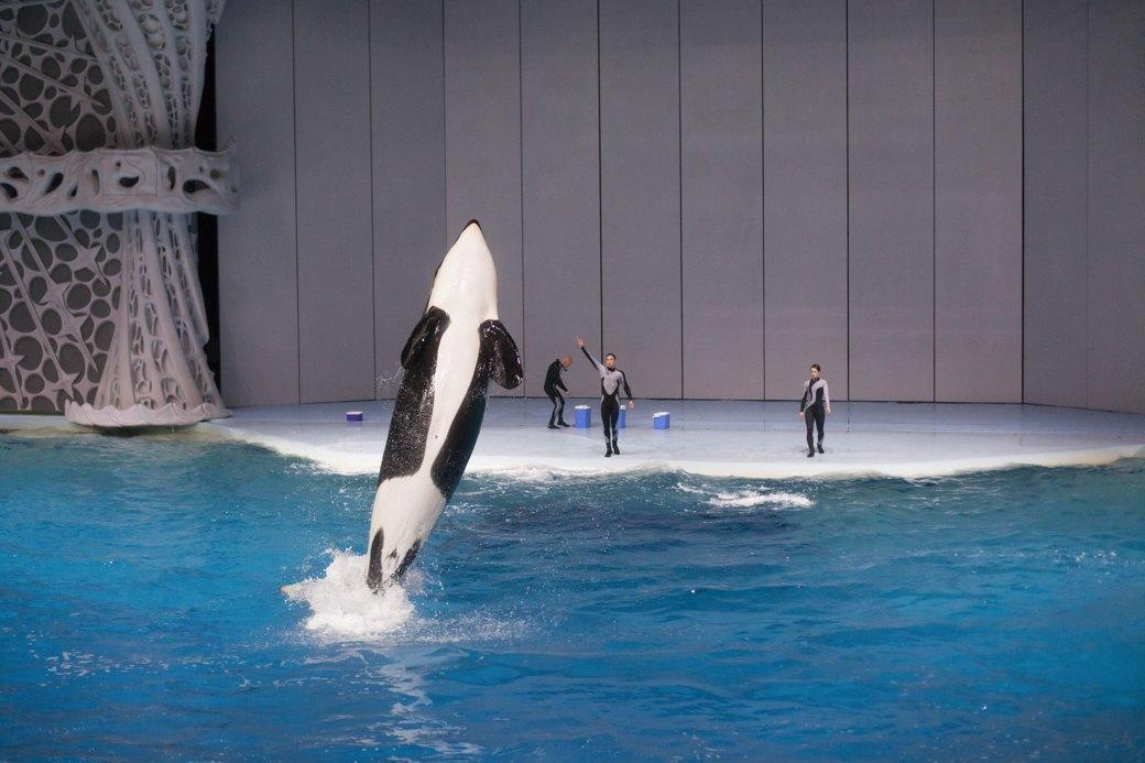 «Главные здесь — косатки, но самые милые — моржи»: На ВДНХ открылся океанариум. Изображение № 21.