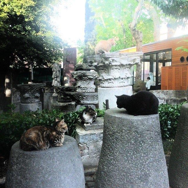 Музейные коты вснимках Instagram. Изображение № 2.