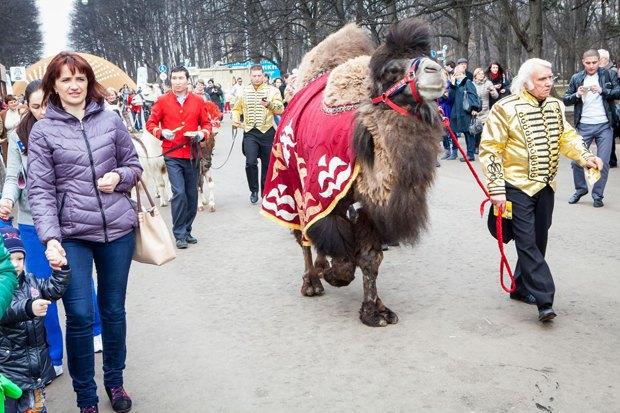 В «Сокольниках» повыходным проводят парады животных. Изображение № 1.