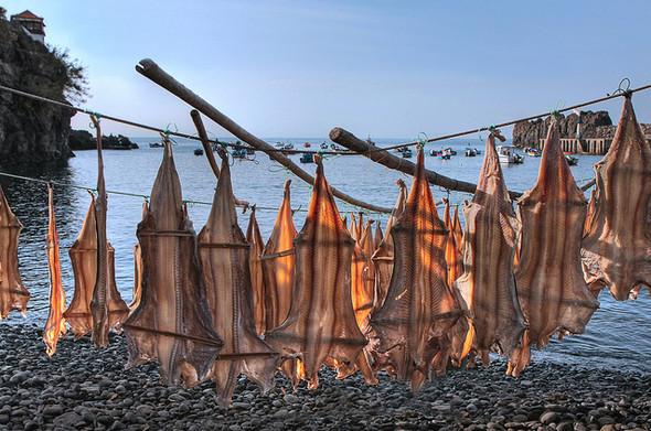 Национальное блюдо - бакаляу (bacalhau). Изображение № 11.